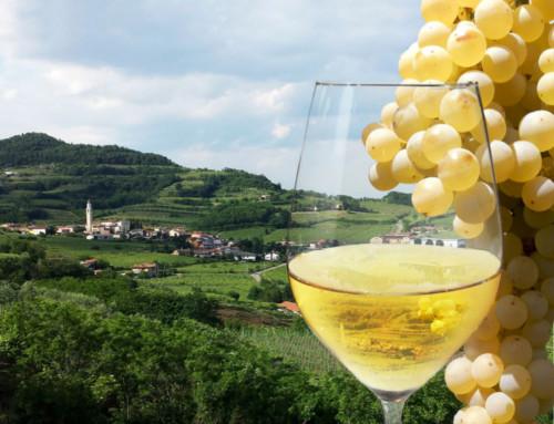 48ª Festa del Vino di Selva di Montebello